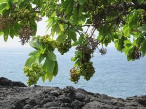 10ハワイ島。オアフ (72)