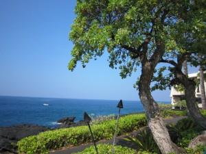 9ハワイ島 (26)