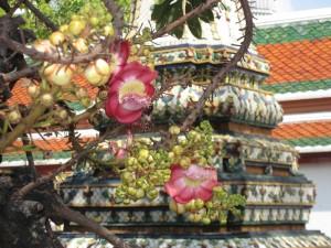 沙羅双樹の花⑤