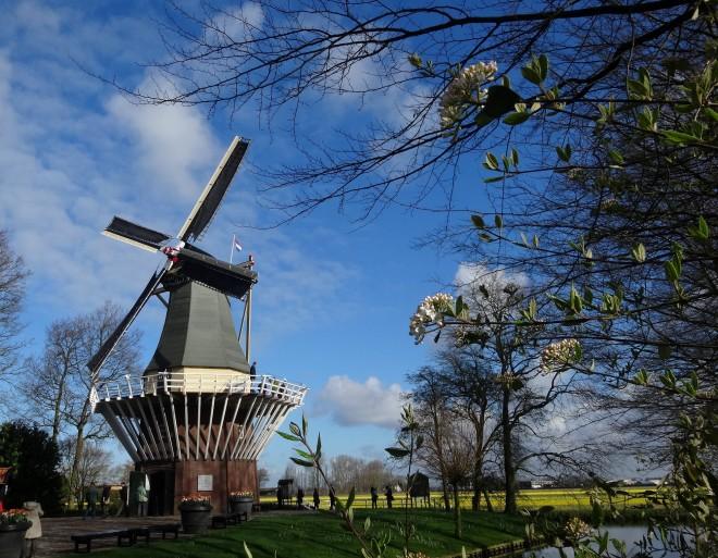 3-1オランダ  キューケンフォフ公園 風車